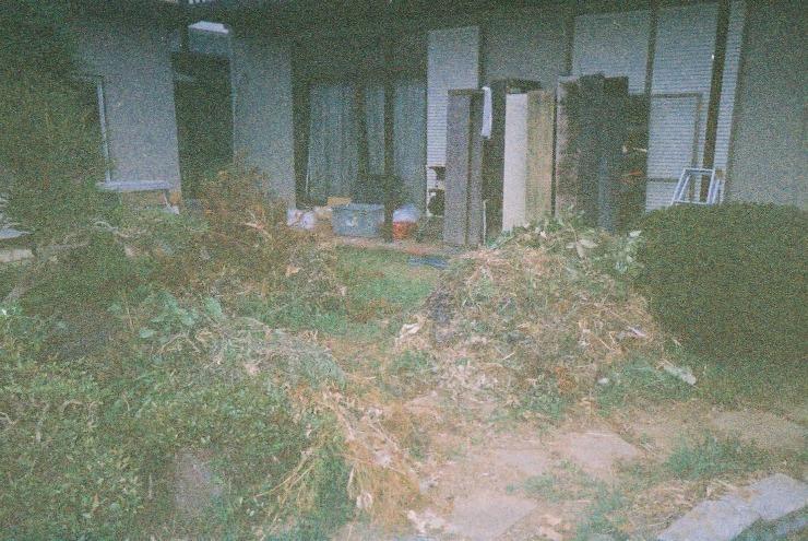 ジャングル化した庭を整理中の写真