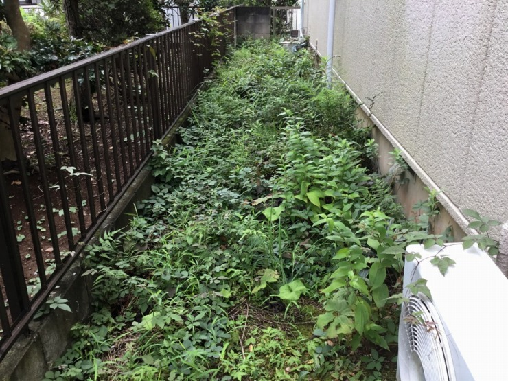 裏庭の通路の雑草写真